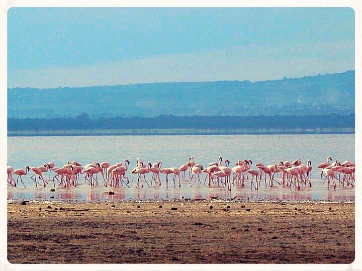 Beautiful Kenya