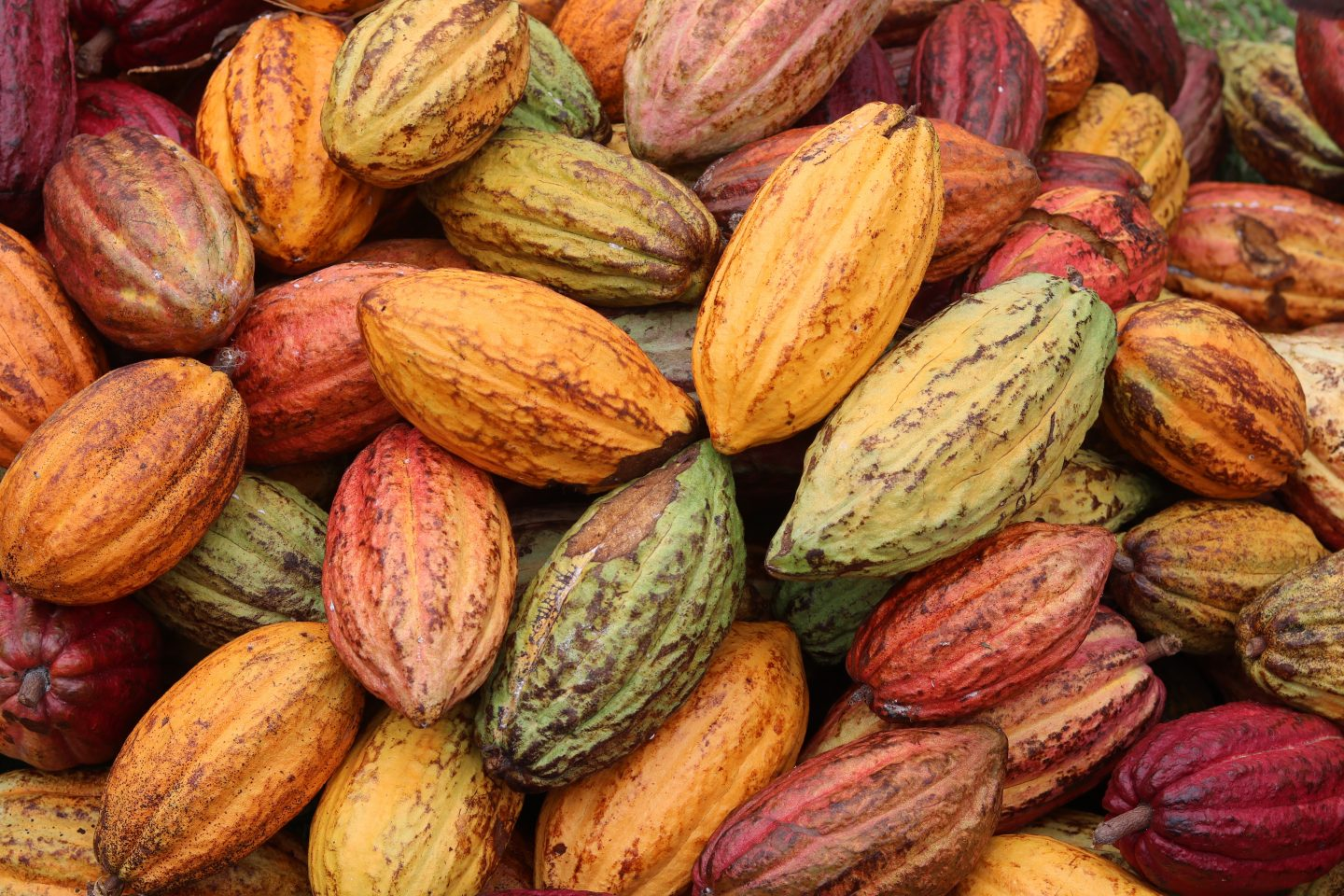 Ethical Chocolate and The 'Tree to Bar' Chocolate production process in Grenada