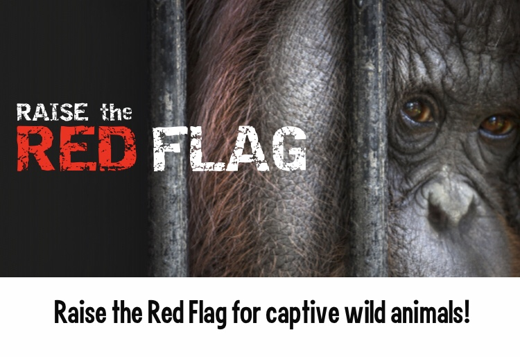 Born Free Foundation launch 'Raise the Red Flag' to report captive animal suffering