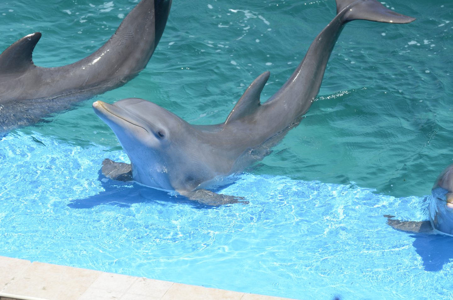 Don't be fooled by a smile – The plight of Dolphins held in captivity and what you can do to help.