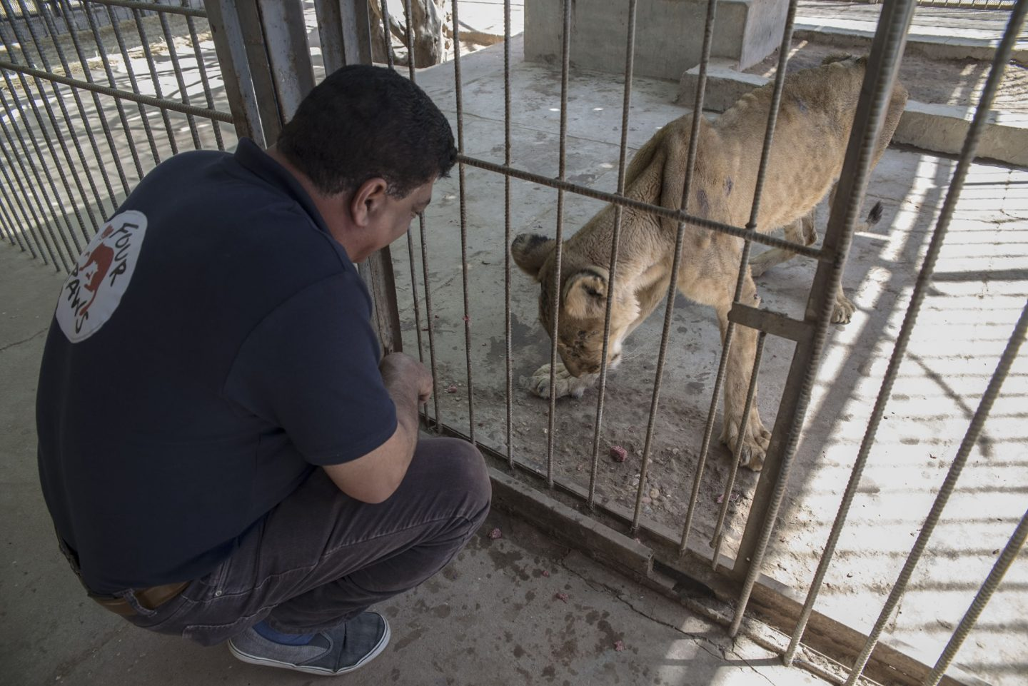 Updates on the Sudan Lions and how you can help #SaveSudanLions